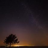 Árvore no fundo do céu estrelado Imagens de Stock