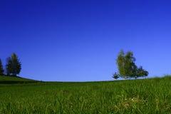 Árvore no horizonte Imagem de Stock Royalty Free
