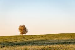 Árvore no horizonte do campo sob o céu azul Fotografia de Stock