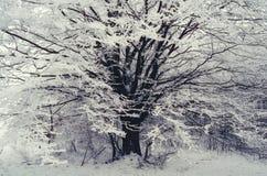 Árvore no inverno Imagem de Stock