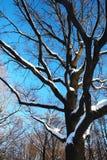 Árvore no inverno Foto de Stock