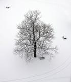 Árvore no inverno fotografia de stock