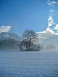 Árvore no inverno Imagens de Stock Royalty Free