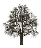 Árvore no inverno Foto de Stock Royalty Free