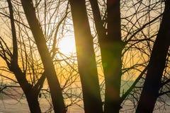 Árvore no inverno e no sol Foto de Stock