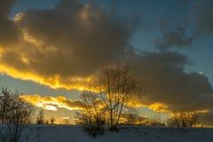 Árvore no inverno em um fundo de nuvens coloridas Fotos de Stock