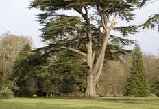 Árvore no jardim da casa de Ickworth Foto de Stock