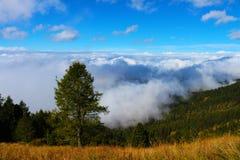 Árvore no lado da montanha acima das nuvens Fotografia de Stock