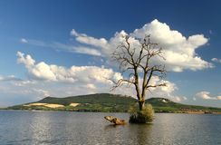 Árvore no lago imagens de stock royalty free
