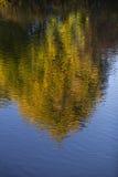 Árvore no lago foto de stock