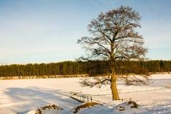 Árvore no lago congelado Foto de Stock Royalty Free