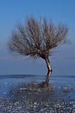 Árvore no lago congelado Fotos de Stock Royalty Free