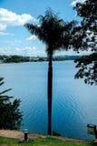 Árvore no lago em Belo Horizonte, Minas Gerais Pampulha, Brasil, Ámérica do Sul imagens de stock royalty free