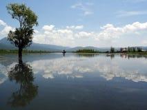A árvore no lago Lashihai fotografia de stock