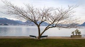Árvore no lago Maggiore fotos de stock royalty free