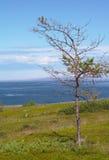 Árvore no litoral Fotografia de Stock Royalty Free