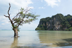 Árvore no mar Imagem de Stock
