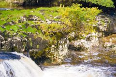 Árvore no meio das cachoeiras Imagens de Stock
