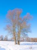 Árvore no meio do campo Foto de Stock Royalty Free