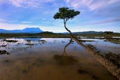 Árvore no meio do campo de almofada Fotos de Stock Royalty Free