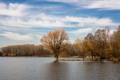 Árvore no meio do lago Imagens de Stock Royalty Free
