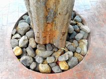 Árvore no molde fotografia de stock royalty free