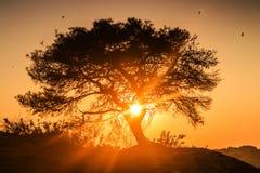 Árvore no nascer do sol Fotos de Stock