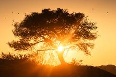 Árvore no nascer do sol Fotos de Stock Royalty Free