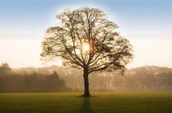 Árvore no nascer do sol com retroiluminado Imagem de Stock