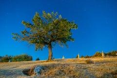 Árvore no nigth fotografia de stock royalty free