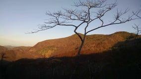 Árvore no nivelamento da maneira Fotografia de Stock Royalty Free