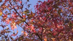 Árvore no outono filme