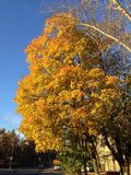 Árvore no outono Imagem de Stock Royalty Free