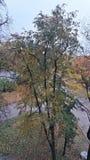 A árvore no outono imagem de stock