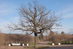 Árvore no parque Fotografia de Stock Royalty Free