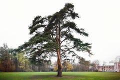 Árvore no parque Fotos de Stock Royalty Free