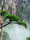 Árvore no penhasco Imagens de Stock Royalty Free