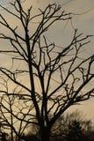 Árvore no por do sol Fotos de Stock Royalty Free