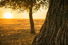 Árvore no por do sol fotografia de stock