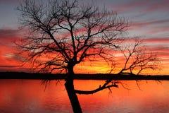 Árvore no por do sol Fotografia de Stock Royalty Free