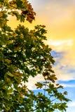 Árvore no por do sol Foto de Stock