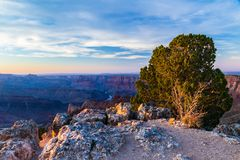 Árvore no por do sol no monte rochoso em Grand Canyon oriental A garganta e o Rio Colorado estão abaixo; céu azul e nuvens no fun fotografia de stock royalty free