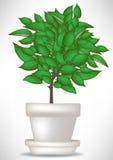 Árvore no potenciômetro Imagem de Stock