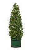 Árvore no potenciômetro Imagem de Stock Royalty Free