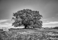 Árvore no prado Fotografia de Stock Royalty Free