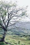 Árvore no prado de negligência da Irlanda de Clifden imagem de stock