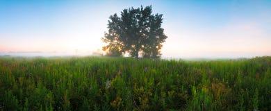 Árvore no prado na névoa com luz solar fotografia de stock