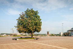 Árvore no quadrado de cidade Imagens de Stock Royalty Free