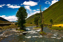 A árvore no rio Fotos de Stock