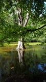 Árvore no rio Imagem de Stock